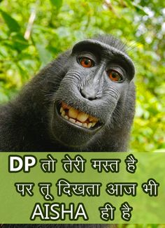 Whatsapp Dp Images Pictures Wallpaper Photo Pics Free HD Download Share Funny Good Morning Images, Good Morning Photos, Monkey Pictures, Life On A Budget, Funny Memes Images, Happy Birthday Meme, Birthday Memes, Whatsapp Dp Images, Funny Happy