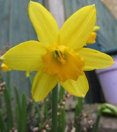 Spring..