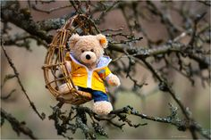 Teddy and his new swing by Mariette Walle - Photo 201917409 / Teddy Bear Pictures, Baby Girl Pictures, Love Bear, Cute Teddy Bears, How To Get Warm, Betta, Family Photos, Animals, Opportunity