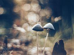 Autumn walk in the forest..(3) (dan leszek kołudzki / Poland) #SLT-A57 #macro #photo #insect #nature