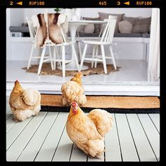 My week in pictures by stylist @Kara Rosenlund - this is her Brisbane home (and her chickens). More on the Temple & Webster blog.