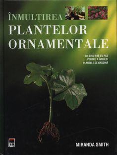 Inmultirea magnoliei prin butasi Fruit Plants, Magnolia, Hip Bones, Plant, Magnolias