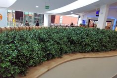 Hand made Artificial Boxwood Hedges made to fit planters already in situ at St Stephens Shopping Centre Hull UK