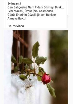 Diy And Crafts, Plants, Allah, Smile, Silk, Acupuncture, Plant, Planets, Laughing