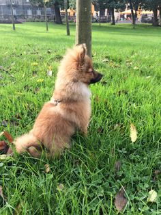 When to Change Your Dog's Diet Chihuahua, Right On Track, Dog Diet, Take A Nap, Beautiful Dogs, You Changed, Cute Puppies, Dog Breeds, Corgi