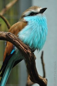 Aqua Brown bird