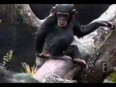 #kendrawilkinson #monkey #animals #funny