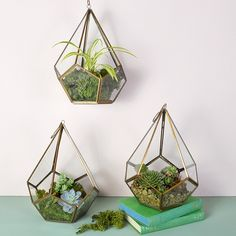 This pentagon brass terrarium is a stylish way to join the trend for all things green and natural. Create your own indoor garden by planting up with soil, moss and small succulents.