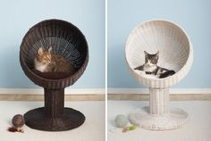 Kitty Ball Bed by Refined Feline. Some cats like to lounge in style. Available from Coco & Pud. Hanging Furniture, Cat Furniture, Fancy Cats, Cat Accessories, Animal Projects, Cat Design, Pet Beds, Cat Toys, Cats And Kittens