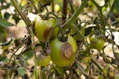 Farm Gardens, Soda, Fruit, Vegetables, Health, Salud, Soft Drink, Health Care