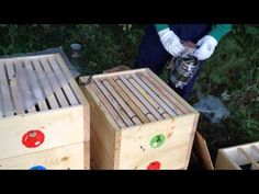 Bez rámkové včelaření - YouTube