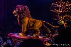 Festival of the Lion King Disney Parks, Disney Pixar, Lion King Animals, Park Photos, View Image, Animal Kingdom, Orlando, Cool Photos, Lion Sculpture