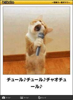 Are Cats Nocturnal Cute Funny Animals, Cute Baby Animals, Animals And Pets, Funny Cats, Cat Entertainment, Japanese Funny, Cat Nose, Just For Laughs, Funny Comics