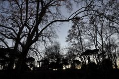 Silhouette - Villa Borghese - Roma