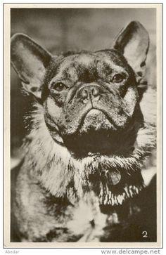 Cpa. Chien. Bulldog, Bouledoque France Hund Cani Vintage Dog Postcard cpa. - Delcampe.net