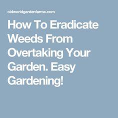 How To Eradicate Weeds From Overtaking Your Garden. Easy Gardening!