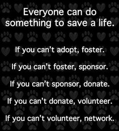 foster, sponsor, donate, volunteer, network ~ save a shelter pet's life