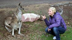 **** Out of Melbourne-Woman hanging out with a group of kangaroos on Phillip Island