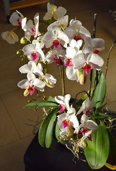 Rempoter une Orchidée Ikebana, Agriculture, Bonsai, Nature, Green, Flowers, Jelly Desserts, Shiva, Gardening