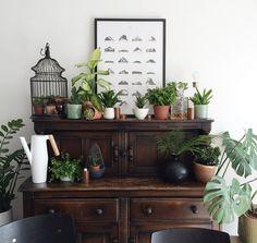 Plants + Wood