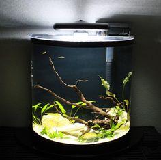 Fish Tank For Sale, Large Fish Tanks, Home Aquarium, Aquarium Fish, 20 Gallon Long Aquarium, Live Plants, Pets, Awesome, Aquascaping
