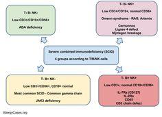 Severe Combined Immunodeficiency (SCID) subtypes