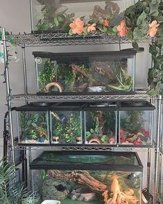 Reptile Habitat, Reptile Room, Reptile Cage, Reptile Tanks, Les Reptiles, Cute Reptiles, Reptiles And Amphibians, Terrariums Diy, Terrarium Reptile