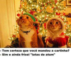 Presente mais legal que esse não tem! Feliz Natal! #salve #proteja #gatos