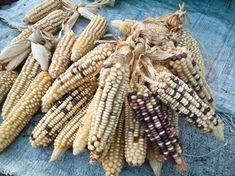 Sweet corn maize is a mutant of maize that contains at least double the sugar content of traditional maize. Corn Maize, Vegetable Farming, Corn Plant, Organic Compost, Fertilizer For Plants, Corn On Cob, Top Soil, Planting Vegetables, Sweet Corn