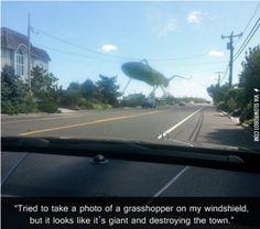 Giant grasshopper destroying the town!