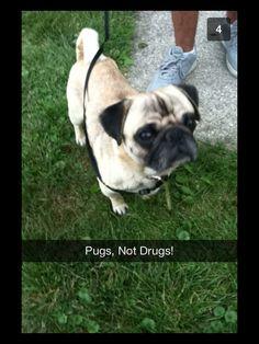 Pugs not drugs!