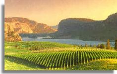Okanagan area of BC. Lots of Vineyards. Why not go on a winery tour? State Of Oregon, Pacific Northwest, British Columbia, Where To Go, North America, Vineyard, Landscapes, Canada, Tours