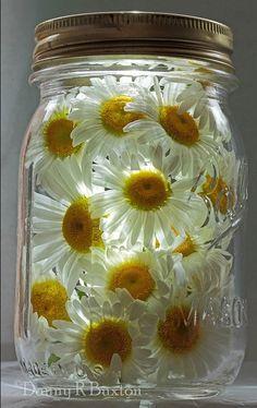 Daisy - Mason Jar - from The Enchanted Cove Mason Jars, Mason Jar Crafts, Daisy Wedding, Wedding Flowers, Wedding Bouquets, Daisy Love, Daisy Daisy, Deco Floral, Fairy Lights