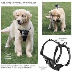 Tru Fit Camera Mount Harness - Dog Beds, Dog Harnesses and Collars, Dog Clothes and Gifts for Dog Lovers | In The Company Of Dogs