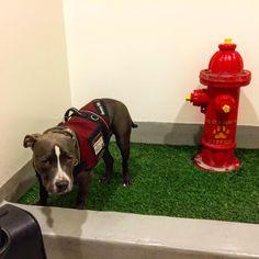 Rover Relief Area Urban Dog Service Animal Relief