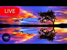 🔴 Relaxing Sleep Music, Healing Music, Insomnia, Yoga, Meditation Music, Study Music, SleepWelcome everyone! I hope your are having an amazing Day/Night! Get back loosen up your body take a deep breath and enjoy my music with the beautiful imagery from all around the world!   All music composed by Astro Universe - Relaxing Music  My music for sleep and sleep meditation is ideal calming music for yoga  meditation and zen or can be used as stress relief music. So if you need music to help you… Calming Music, Relaxing Music, Stress Relief Music, Take A Deep Breath, Music Heals, Meditation Music, Insomnia, My Music, Around The Worlds