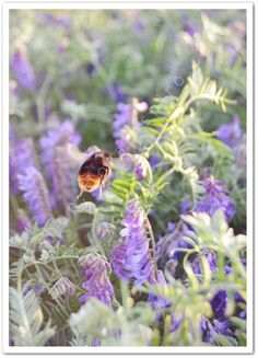 Bumble Bee - from http://shop.florainspiro.com Photography by Emelie Ekborg