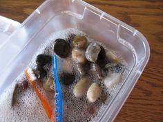 Muffin Tin Mom: Preschool Sensory Activity: Washing Rocks!
