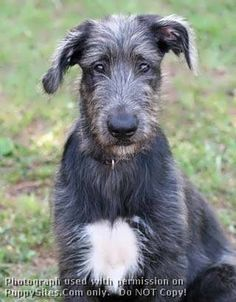This is the dog I want, but this one is a little pup :)