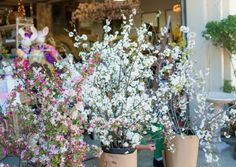 Spring dogwood, white peach and cherry floral branches you're going to love!