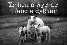 24 beautiful Welsh proverbs and sayings that show the language at its finest - Wales Online Welsh Sayings, Welsh Words, Wales Language, Finnegans Wake, Language Quotes, Creating Positive Energy, Proverbs Quotes, Life Lyrics, Cute Animal Drawings
