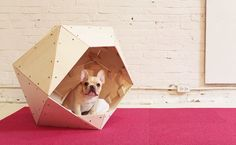 Checkout this cool DIY project to build a cool geometric dog house. HomeMade Modern Geometric Dog House features faceted, angular appearance, but don't be fooled by its design, it is actually pretty easy to construct. Puppy Beds, Pet Beds, Wooden Dog House, Dog House Plans, House Dog, Cozy House, Diy Dog Crate, Homemade Modern, Dog Milk