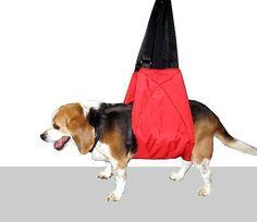 dogsling2.jpg (600×521)
