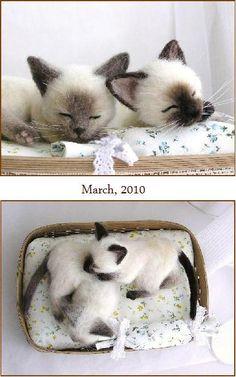 Siamese sleeping kittens by Po Pisolino