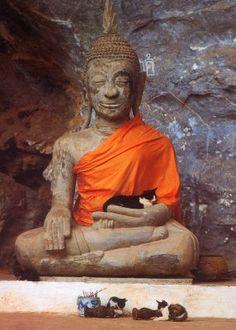 Название: Buddha+Cat.jpg Просмотров: 348 Размер: 30.8 Кб