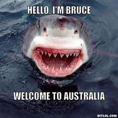 Shark Bruce Meme Generator - DIY LOL Shark Bait, Shark Meme, Cat Shark,