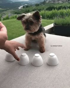 Pin By Arata On Cute 3 Cute Animals Dogs Animals