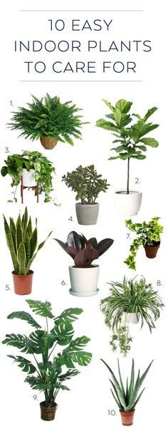 10 Indoor Plants That Are Simple & Easy To Care For | via Birch & Brass Vintage Rentals for Weddings and Special Events in Austin, Texas