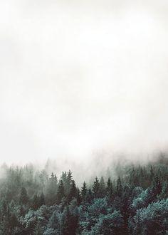 Kuvahaun tulos haulle forest