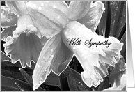 Sympathy, Daffodils in Rain, Black and White Card by Greeting Card Universe. $3.00. 5 x 7 inch premium quality folded paper greeting card. Sympathy cards for the whole family are available at Greeting Card Universe. Show your loved ones you care with a custom paper card to make the occasion memorable. Allow Greeting Card Universe to handle all your Sympathy card needs this year. This paper card includes the following themes: Sympathy, With Sympathy, and Daffod...
